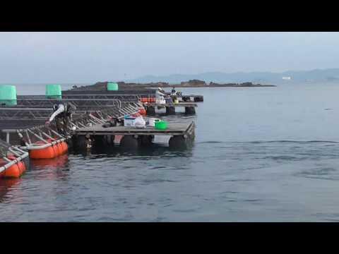 【カタタのいかだ】グレが釣れているボラ筏1~6番