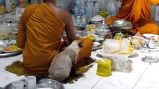 LOVELY ! Thai Buddhist monk eats with his very own pet cat in attendance - 720p HD