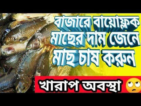 Barasat Fish Market With Price // বাজারে Biofloc মাছের রেট জানতে ভিডিওটি অবশ্যই দেখবেন।