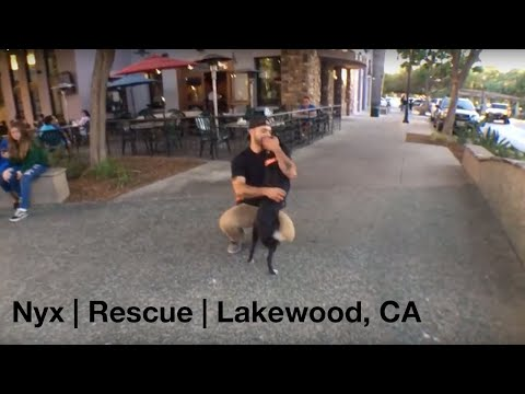 Nyx | Rescue | Lakewood, CA