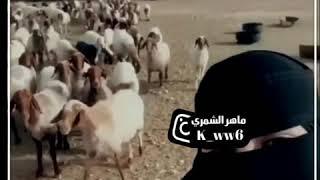 """داوود العبدالله فصلات المجانين"""" بنت سارحة بالغنم ياغنماتي انتو حياتي. 😂😂😂"""