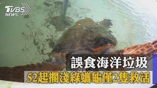 誤食海洋垃圾 52起擱淺綠蠵龜僅2隻救活