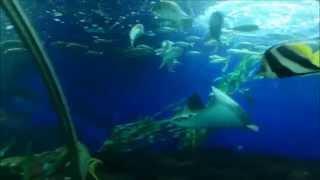 Sentosa Underwater World | Singapore Sentosa Underwater World | Biggest Aquarium in the world