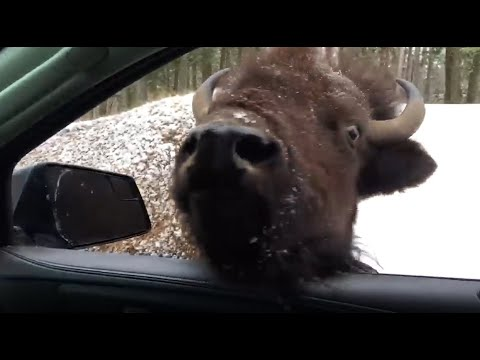 😂Best Funny Animal and Nature Fails😂