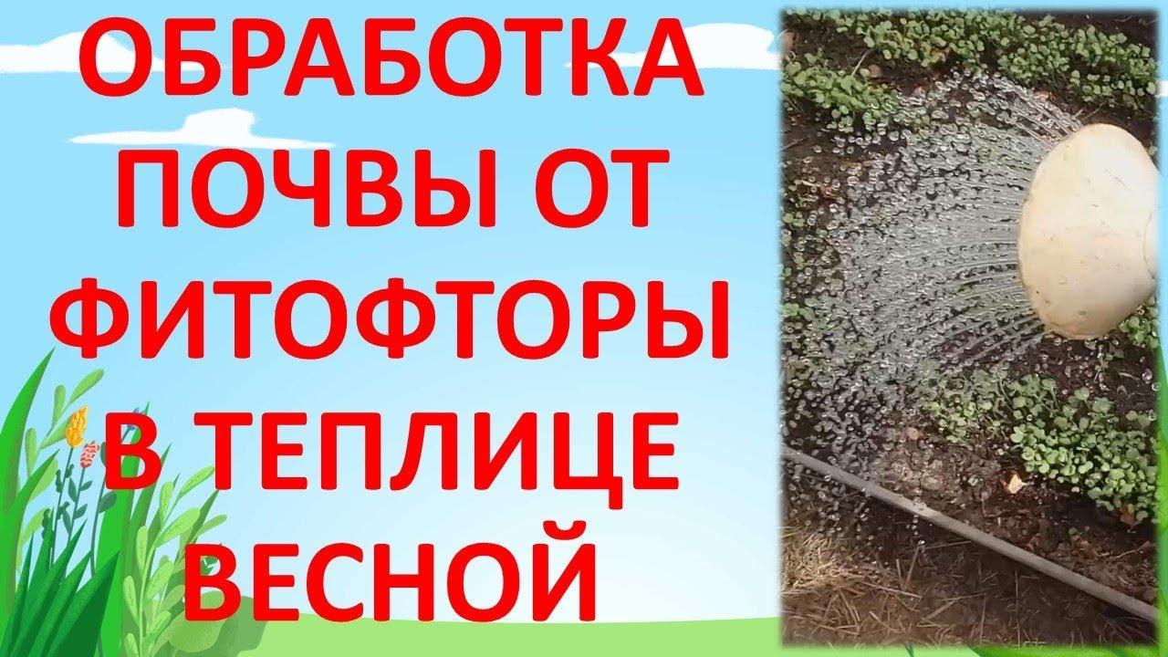 ОБРАБОТКА ПОЧВЫ В ТЕПЛИЦЕ ОТ ФИТОФТОРЫ ВЕСНОЙ. Как подготовить почву в теплице к посевному сезону.