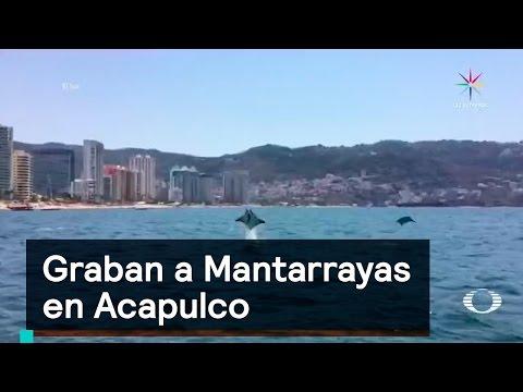 Graban a Mantarrayas en Acapulco - Denise Maerker 10 en punto -