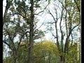 За вырубку курских лесов наказывать стали жестче