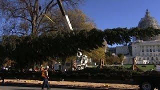Capitol Christmas Tree Arrives on Capitol Hill