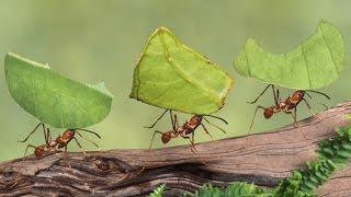 Como eliminar e afastar formigas facilmente dos Pomares e Hortas!