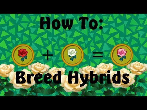 How to: Breed Hybrid Flowers (Animal Crossing: New Leaf)