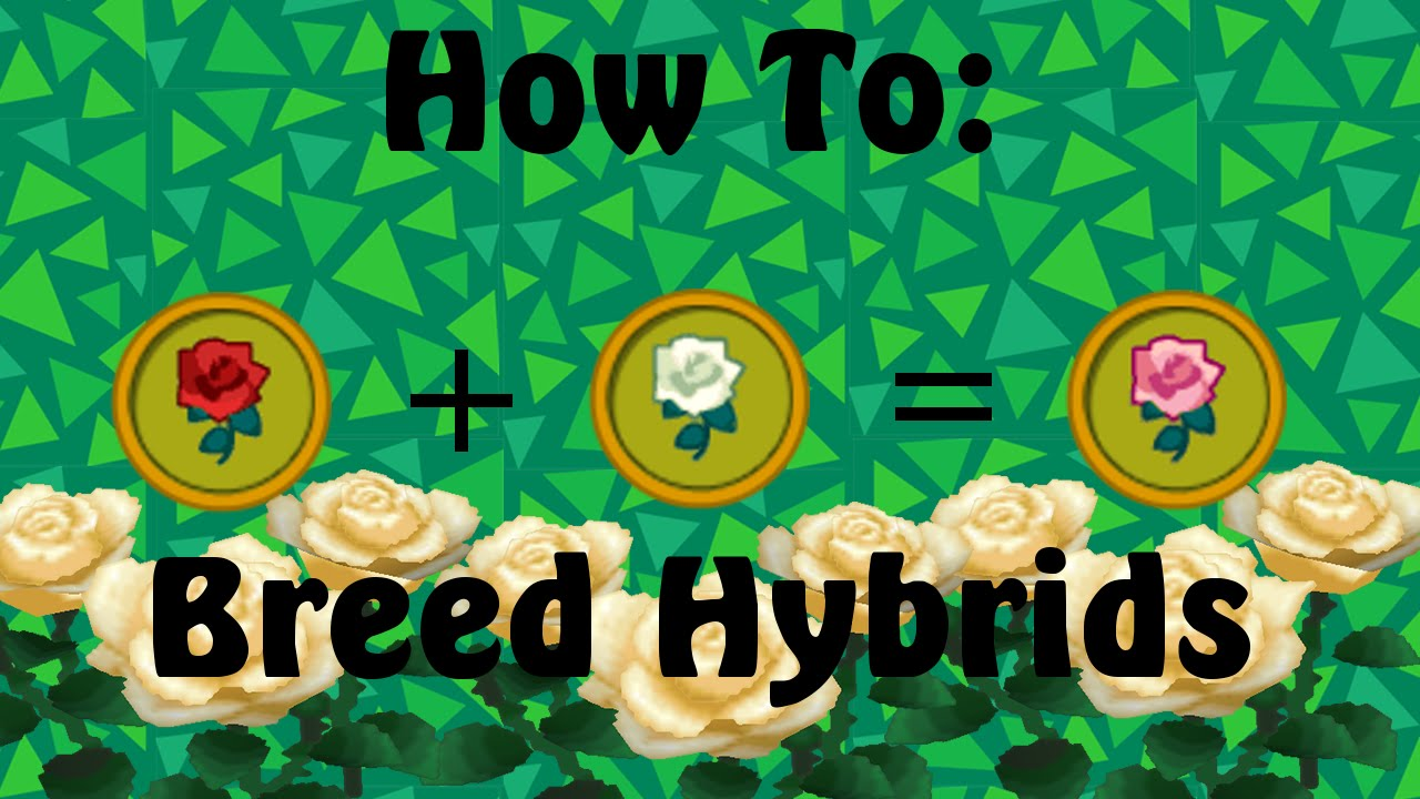 How To Breed Hybrid Flowers Animal Crossing New Leaf Youtube