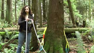 How to Set up for Pulling a Tree or Log in the Woods - Part 1
