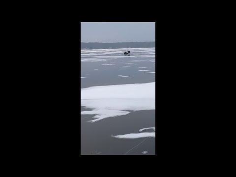 Wolf Hunts A Whitetail In Wisconsin || ViralHog