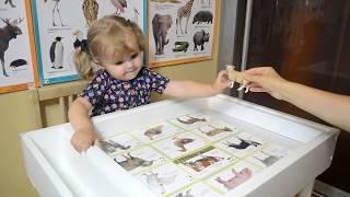 Развивающий урок на знание диких и домашних животных.