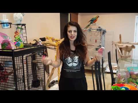 PARRONT TIP TUESDAY: My parrots, their cage set up and toys 🐦💜💚🐦