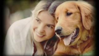 Коллаж из собак