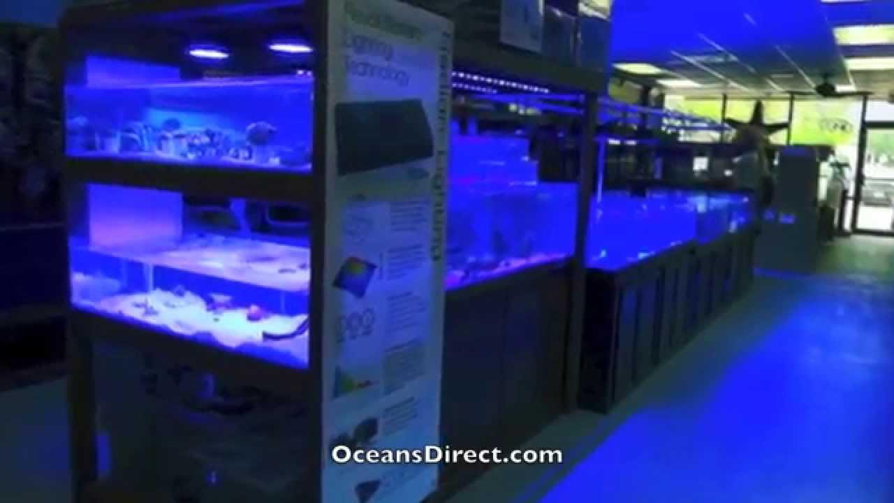 Fish in aquarium stores - Oceans Direct Saltwater Aquarium Store Exotic Fish Custom Tanks Longwood Florida