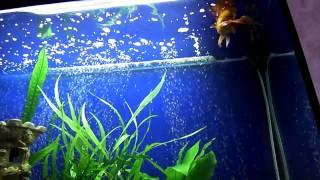 аквариум 140 литров (02)