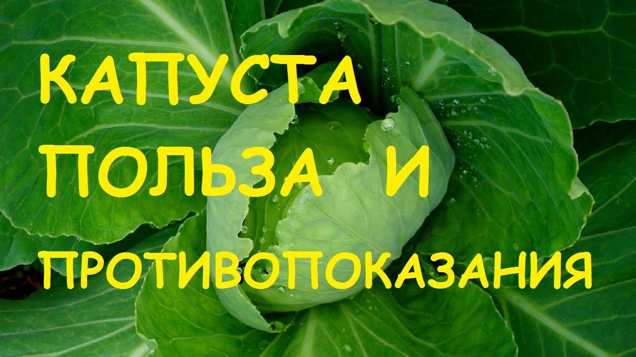 Квашеная капуста: полезные свойства и противопоказания