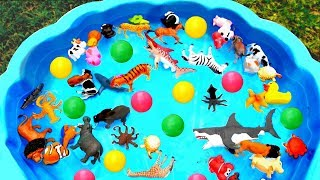 Learn Wild Zoo Animals Toys For Kids Learn Colors With Animal Names Education For Kids