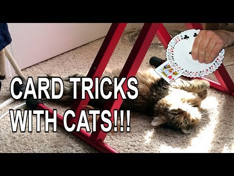 Card Tricks With Cats! Four Ace Card Trick, Gamblers Cutting the Aces,  Sleight of Hand Card Magic