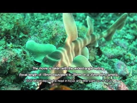 Sample underwater images taken by the Canon EOS 550D/Rebel T2i