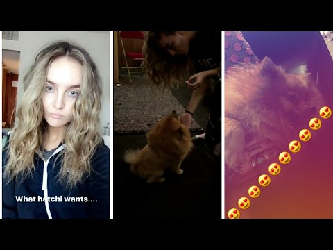 Perrie Edwards Moments With Hatchi During The Glory Days Tour