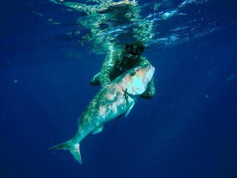 Spearfishing Green Jobfish Mozambique