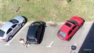Karny kut@s za ch*jowe parkowanie - Kutno