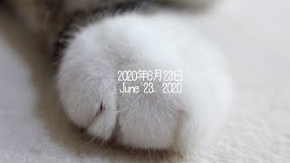 ねこ日記20200623。-Maru&Hana's Diary June 23, 2020.-