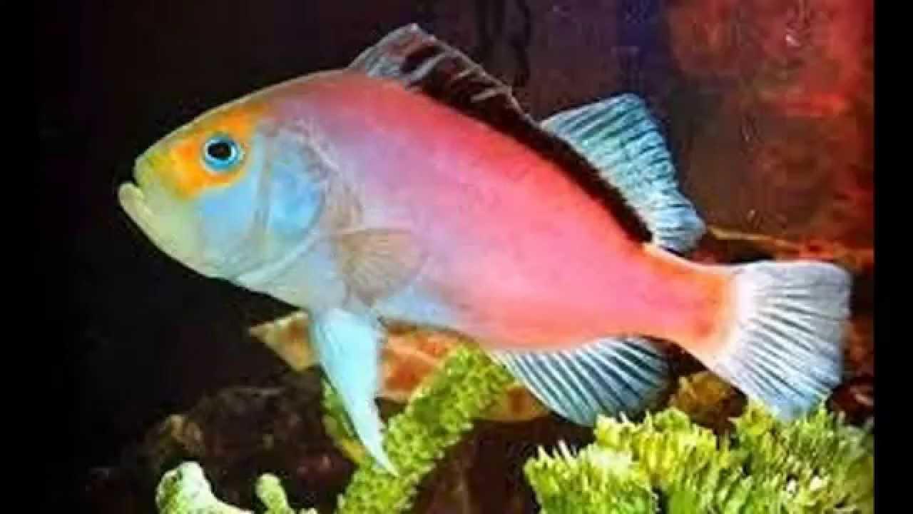 Top 10 peces mas bonitos del mundo youtube - Los peces mas bonitos del mundo ...