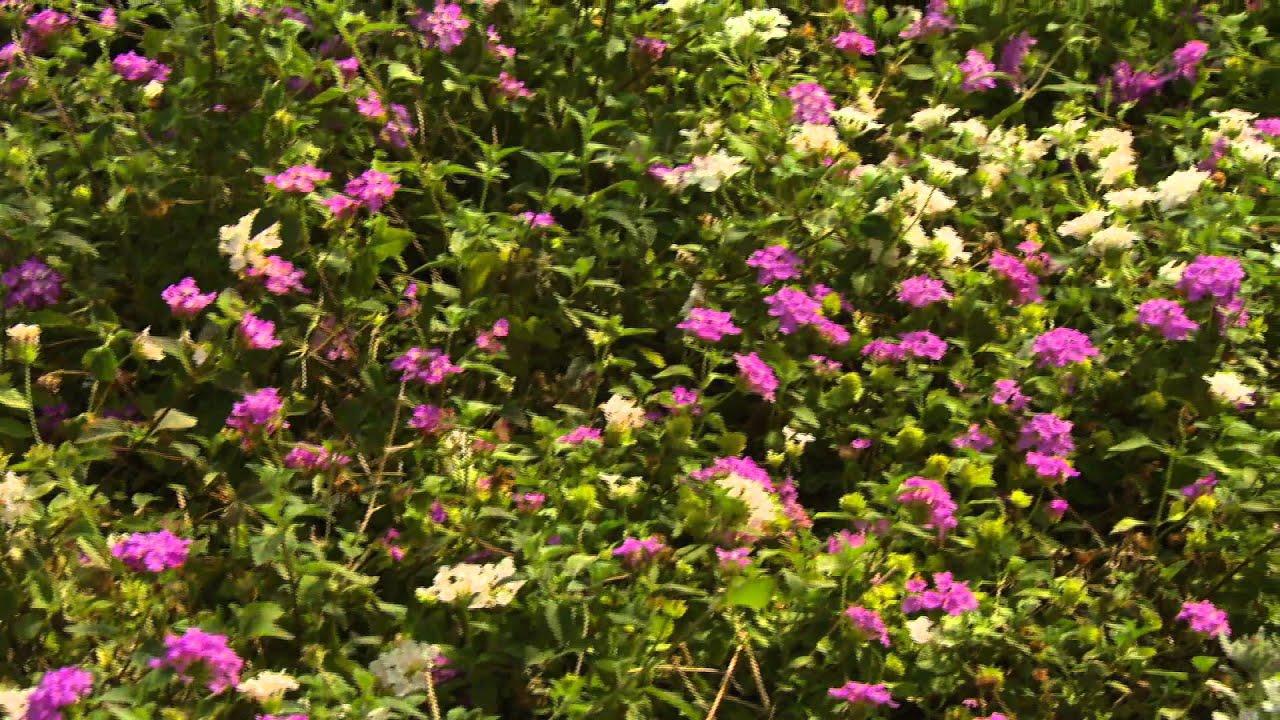 Star Nursery Dr Q Colorful Desert Plants