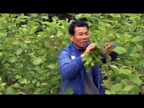 China: Rural Families Earn By Selling Fresh Air