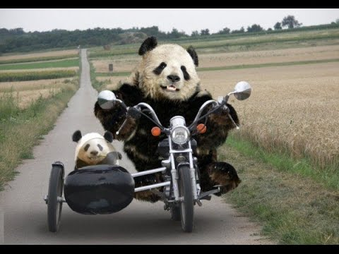 Top Funny Panda Videos Compilation 2017 [BEST OF] - Cute Animals