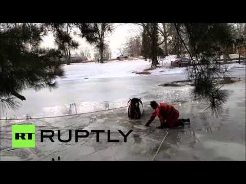Ohio firefighters rescue horse from frozen lake