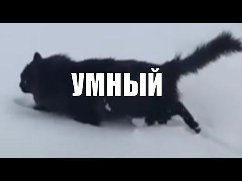 Красавчик Чернуха самый умный кот в мире ❤️ 😻 black cat