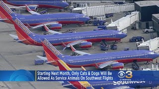 New Policy: Only Cats, Dogs Allowed As Service Animals On Southwest Flights