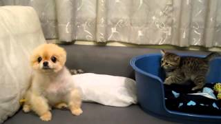 злой, но милый щенок vs добрый котенок