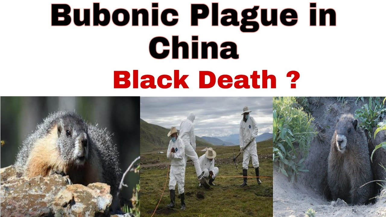 Bubonic Plague China 2020 | Black Death Reported in China ...