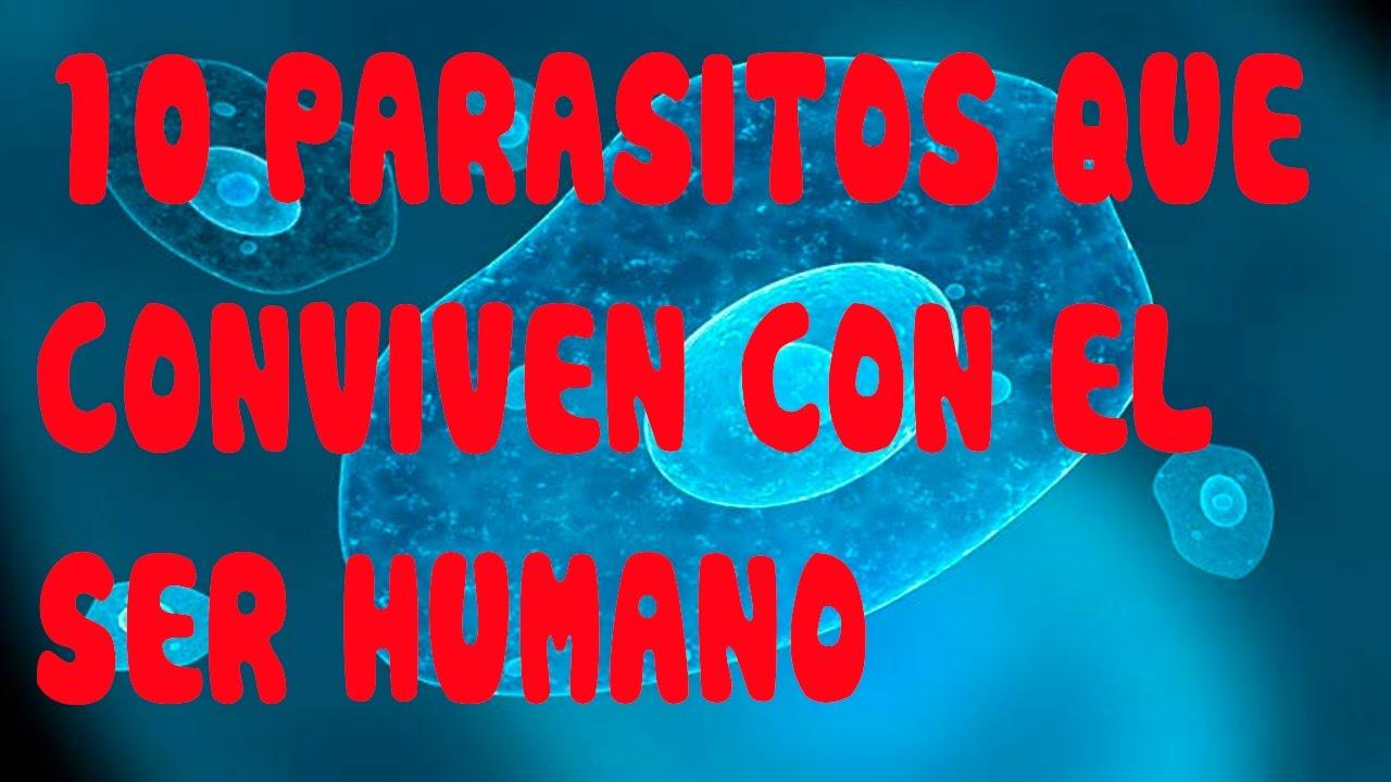Tipos de parasitos intestinales en humanos