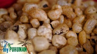The difference between chicharon and chichakalabaw | My Puhunan