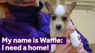 Adopt Waffle | Dogs | Mayhew