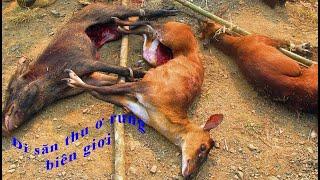 Đi săn thú ở rừng giáp biên giới / Go hunting at the border forest