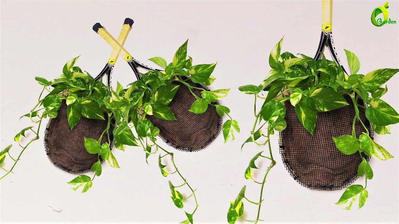💖Unique Idea For Growing Money Plant/Money Plant Tree/ORGANIC GARDEN💖