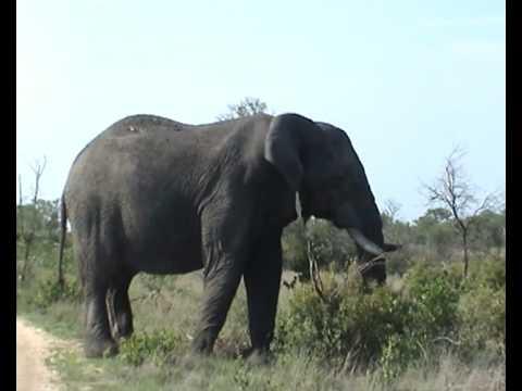 Zebra Impala Elephant Amp Rhino Youtube
