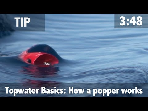 Topwater Basics: How A Popper Works