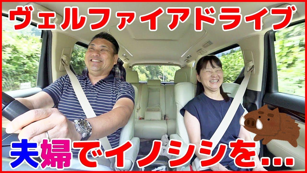 【夫婦で休日ドライブ】初めてイノシシを...