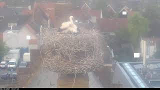 Preview of stream Stork nest Stadhuis Vianen