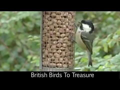 British Birds To Treasure