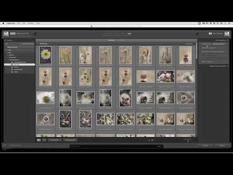 Viewing Images Quickly with the New Embedded Preview Workflow in Lightroom Classic CC